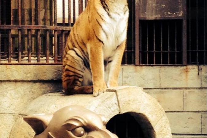 Fort Boyard 2015 : Le tigre est prêt (18/05/2015)