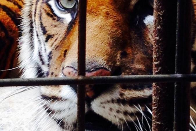 Fort Boyard 2015 : L'oeil du tigre (19/05/2015)