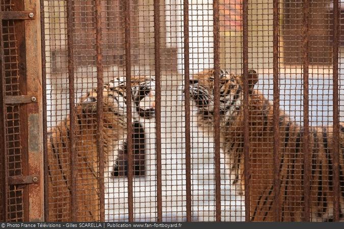 Fort Boyard 2016 - Les tigres