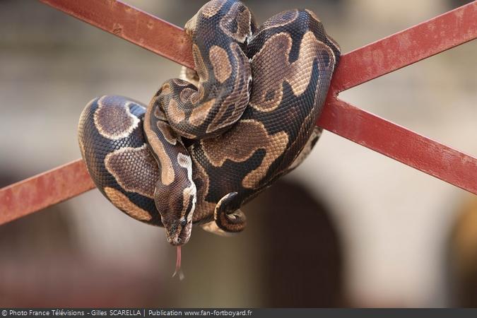 Fort Boyard 2016 - Serpent