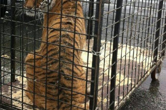 Fort Boyard 2016 - Les tigres sont arrivés au fort pour la 27e saison (23/05/2016)