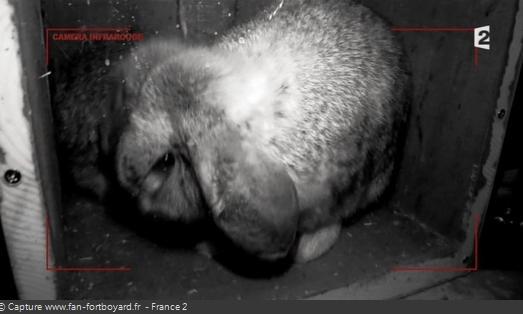 Les animaux de Fort Boyard - Les lapins