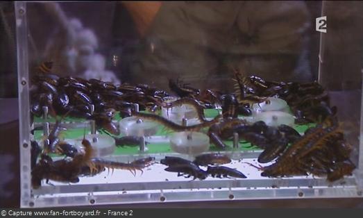 Les animaux de Fort Boyard - Les scolopendres