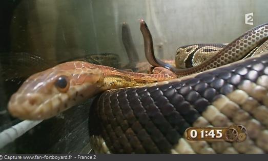 Les animaux de Fort Boyard - Les serpents