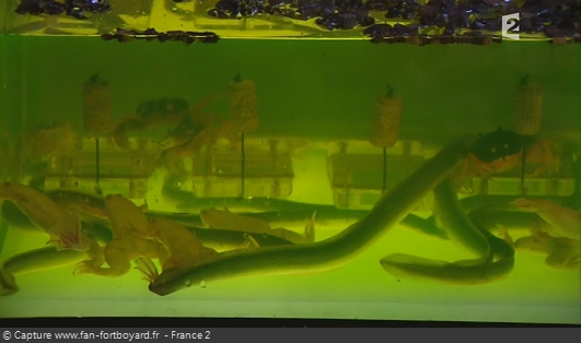 Fort Boyard - Tête dans l'aquarium