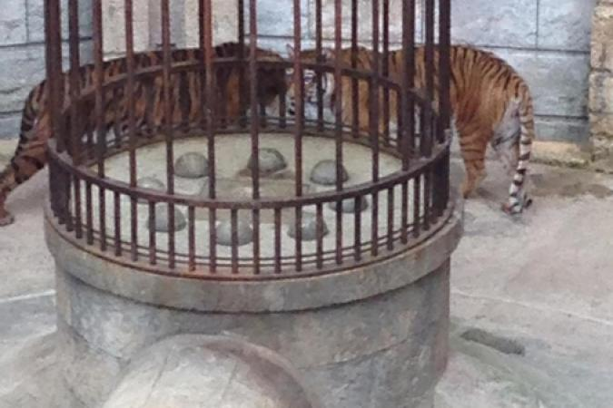 Fort Boyard 2015 : Les tigres sont en place (28/05/2015)