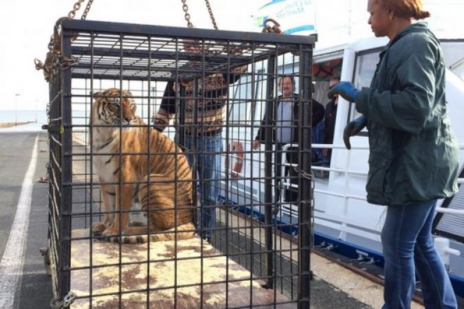 Fort Boyard 2017 - Arrivée des tigres (15/05/2017)