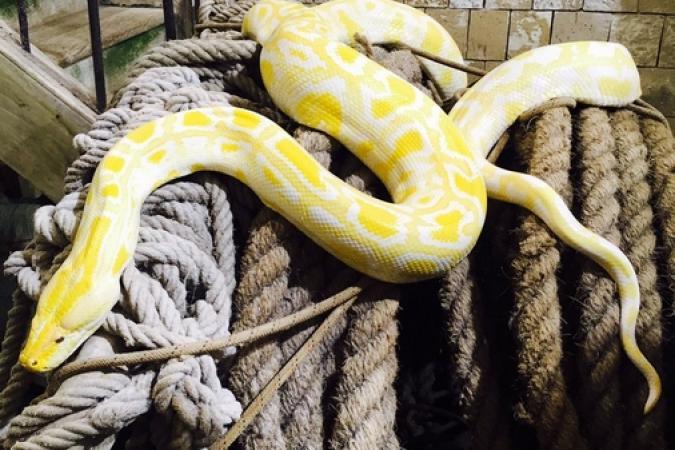Fort Boyard 2017 - Un très gros serpent ! (31/05/2017)