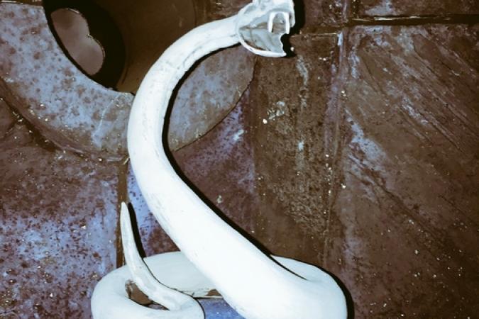 Fort Boyard 2017 - Une serpent blanc sur une boule bleue... (01/06/2017)