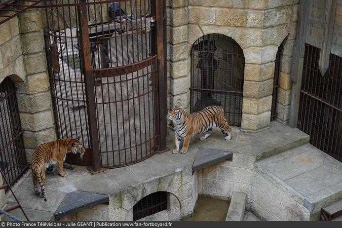 Fort Boyard 2019 - Les tigres dans la Salle du Trésor