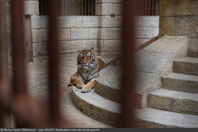 Fort Boyard 2019 - Un tigre dans la Salle du Trésor