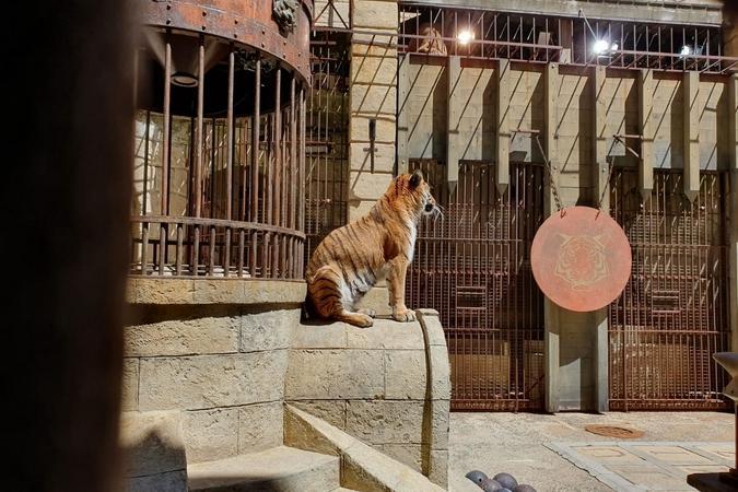 Fort Boyard 2019 - Les tigres sont en place (13/05/2019)