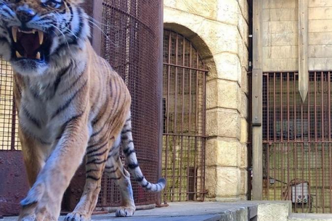 Fort Boyard 2019 - Le tigre surveille le trésor (13/05/2019)