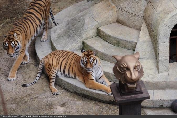 Fort Boyard 2020 - Les deux tigres de la Salle du Trésor