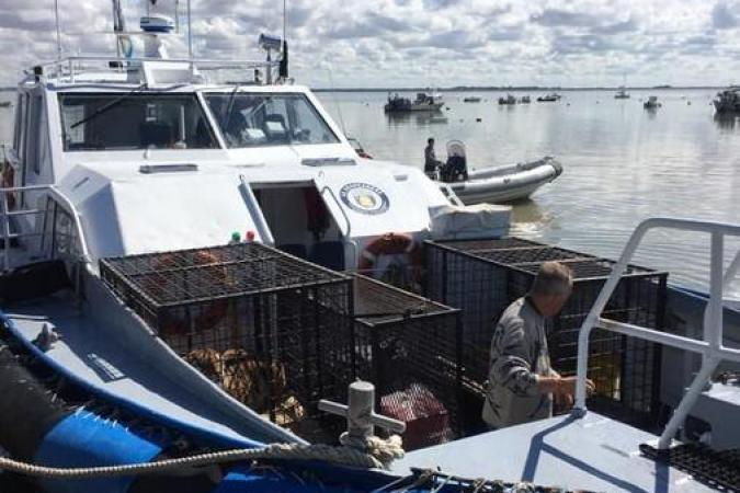 Fort Boyard 2020 - Deux tigres sont arrivés à Fouras, direction le fort (08/06/2020)