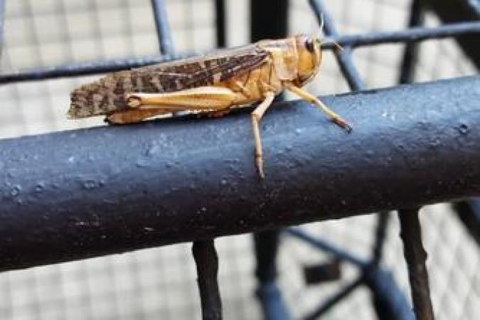 Fort Boyard 2020 - Insecte en liberté (25/06/2020)
