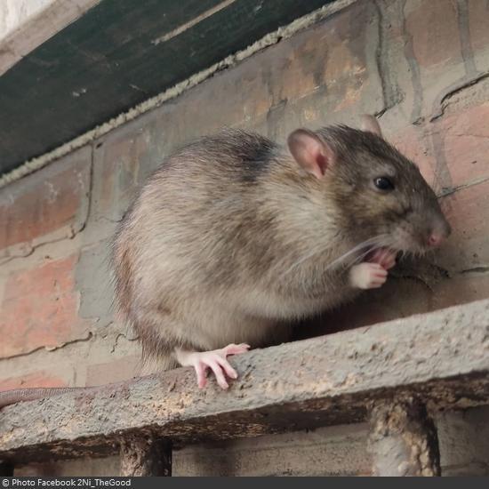 Fort Boyard 2021 - Les animaux sur le fort (18/05/2021)