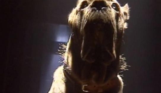 Les animaux de Fort Boyard - Samson, le chien
