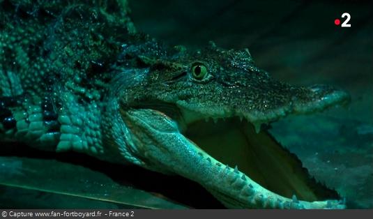 Les animaux de Fort Boyard - Les crocodiles et les alligators