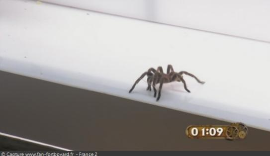 Les animaux de Fort Boyard - Les araignées