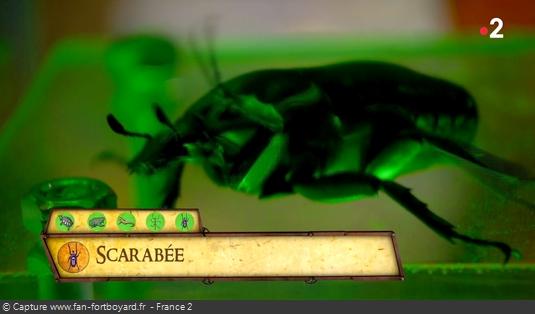 Les animaux de Fort Boyard - Le scarabée