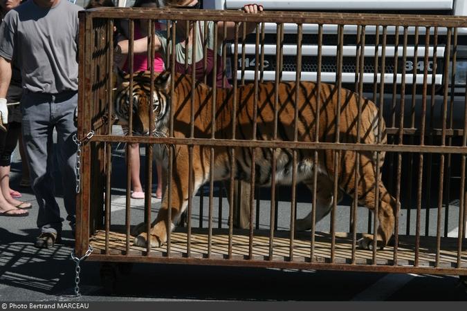 Le transfert des tigres de Fort Boyard 2010 de Bertrand